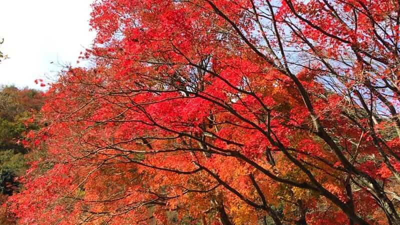 紅雲亭の紅葉